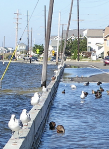 NJ Sea-Level Rise Reports